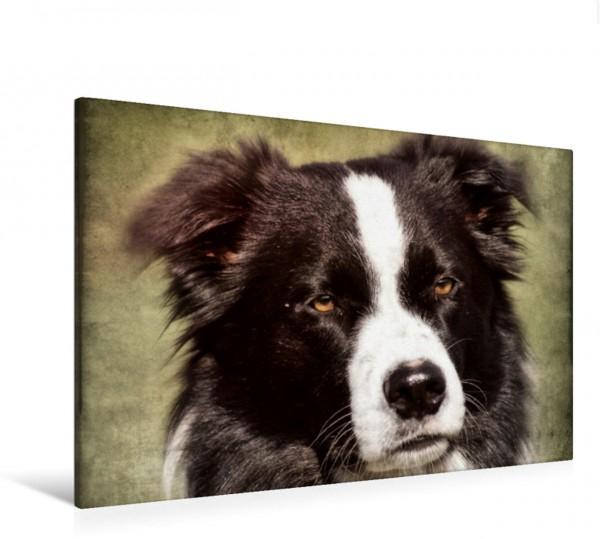 Wandbild Border Collie Hunde und Haustiere Hunde und Haustiere