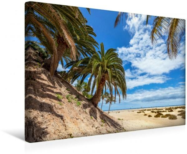 Wandbild Fuerteventura Palmenstrand