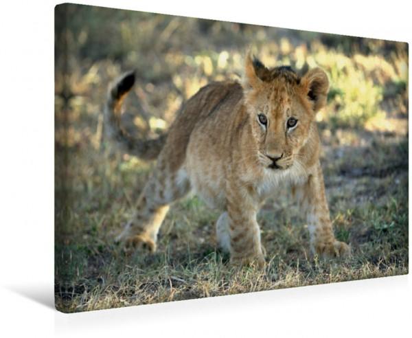 Wandbild Löwe, Kenia