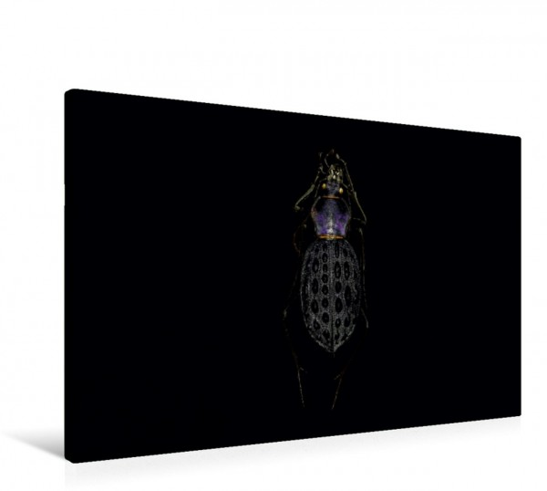 Wandbild Coptolabrus pustulifer