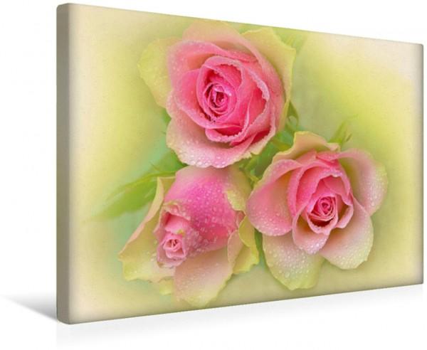 Wandbild Rosenstrauß Rosa Gelb Grün - Natur und Kunst Dezent in warmen Farbtönen! Dezent in warmen Farbtönen!