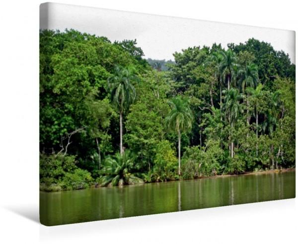 Wandbild Urwald am Ufer des Panama-Kanals