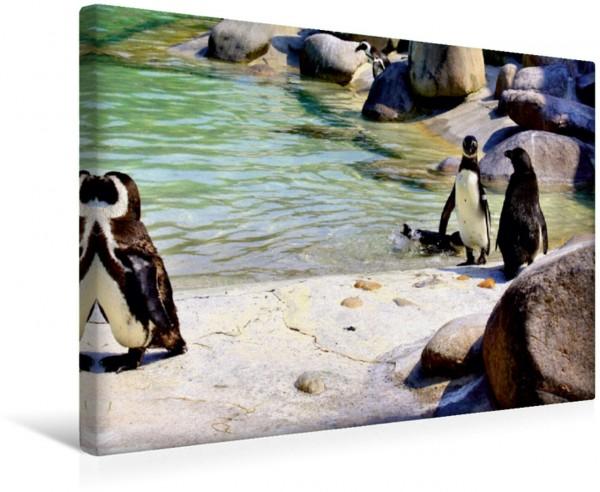 Wandbild Tiere in Parks und Zoos - Familienplaner