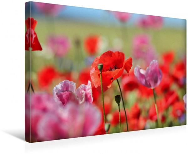Wandbild Rot trifft Pink Mohn zarte Blüten starke Farben Mohn zarte Blüten starke Farben