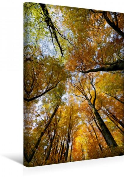 Wandbild Blätterdach im Buchenwald Herbstlicher Buchenlaubwald. Blick hoch in die Baumkrone Herbstlicher Buchenlaubwald. Blick hoch in die Baumkrone