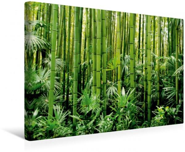 Wandbild BAMBUS Im Bambuswald Im Bambuswald