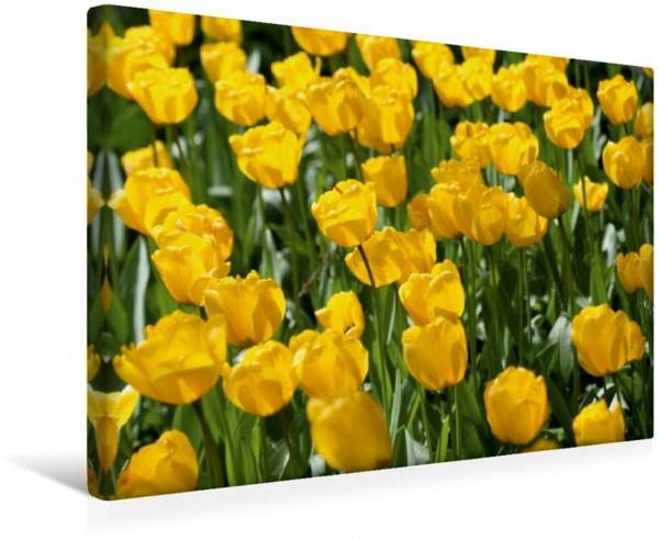 Wandbild Tulpenbeet Tulpen Tulpen