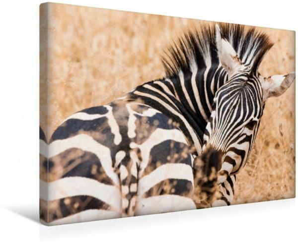 Wandbild Zebra in der Serengeti Tansanias Faszinierende Tierwelt in Afrika Faszinierende Tierwelt in Afrika