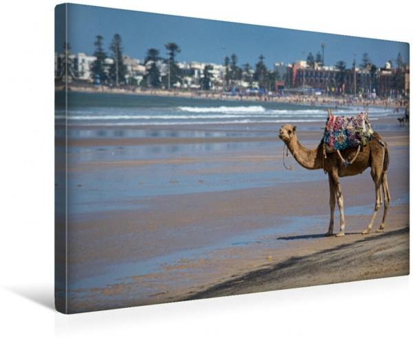 Wandbild Essaouira Marokko Atlantikküste Strandblick mit Kamel Strandblick mit Kamel