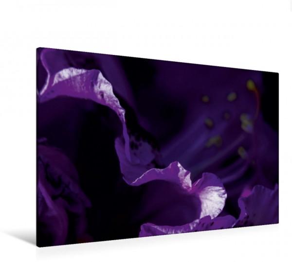 Wandbild Rhododendron Blaue Jungs
