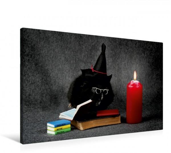 Wandbild Harryschweinchen
