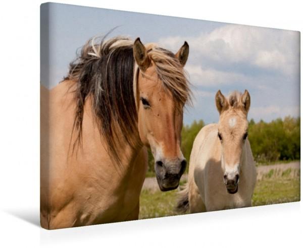 Wandbild Pferde Stute mit Fohlen Pferde Leinwandbild