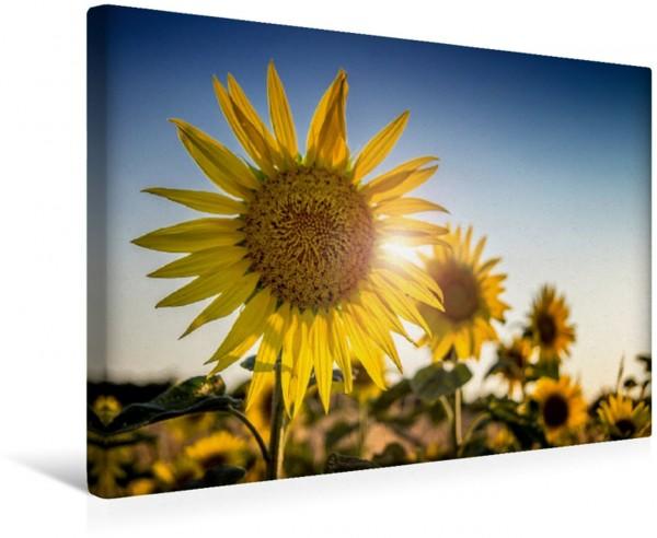 Wandbild Blumen Sonnenblumen Leinwandbild