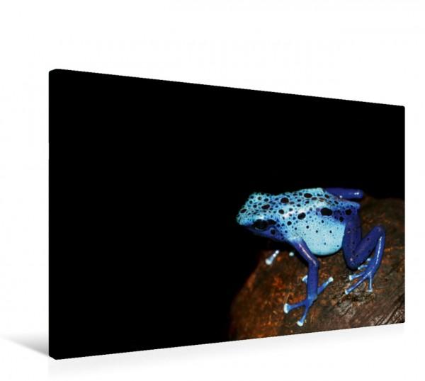 Wandbild Blauer Pfeilgiftfrosch