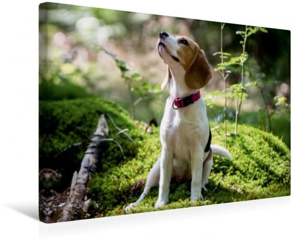 Wandbild Beagle-Mädchen im Wald Was soll ich machen Frauchene Was soll ich machen Frauchene