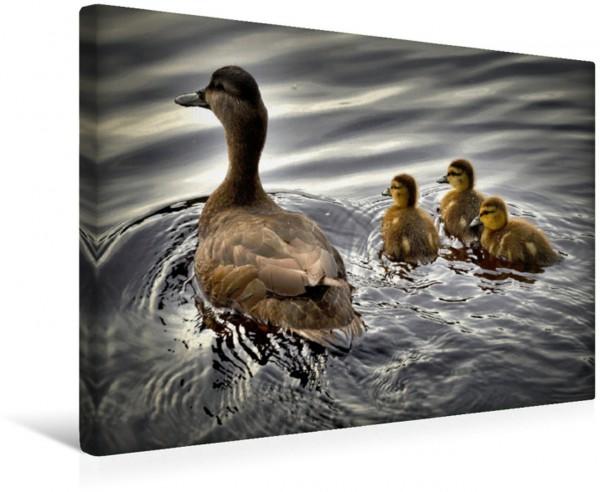 Wandbild Eine Ente mit ihren Küken