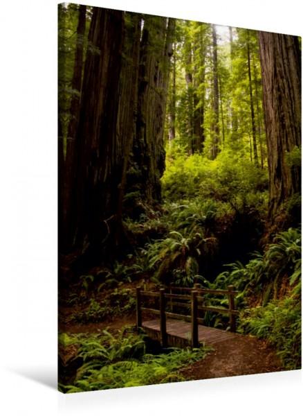 Wandbild Redwood National and States Park