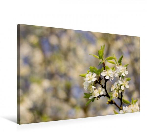 Wandbild Apfelblüte