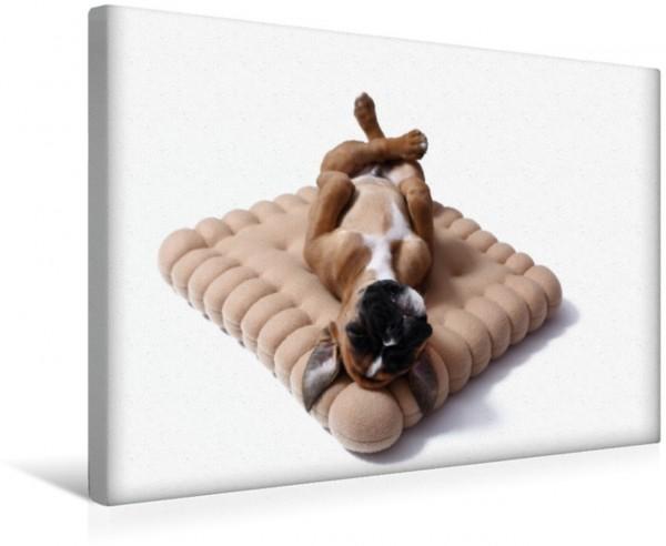 Wandbild Deutscher Boxer Welpe German Boxer Puppy