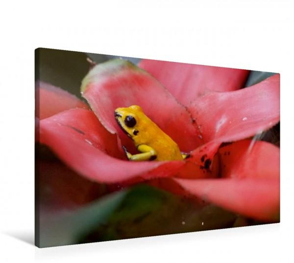 Wandbild Goldener Pfeilgiftfrosch