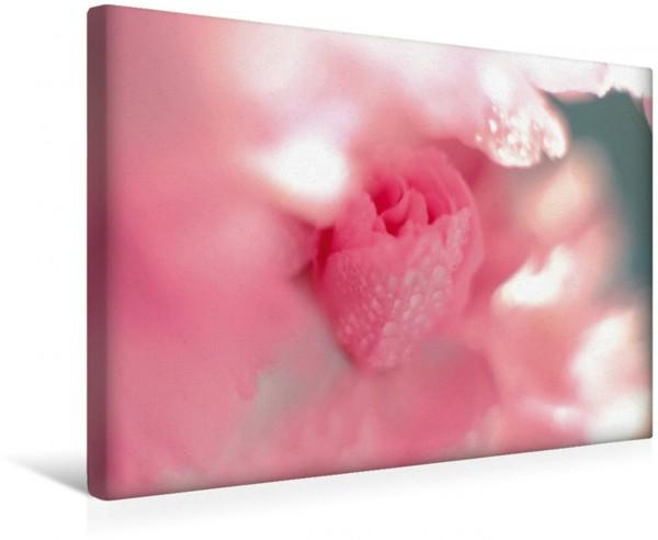 Wandbild Himmlisch: eine zarte Kirschblütenknospe Ein Bild das uns tief im Herzen berührt und uns an die Zerbrechlichkeit der Natur erinnert Ein Bild das uns tief im Herzen berührt und uns an die Zerb