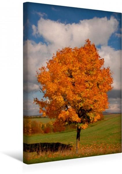 Wandbild Herbsttage im Taunus