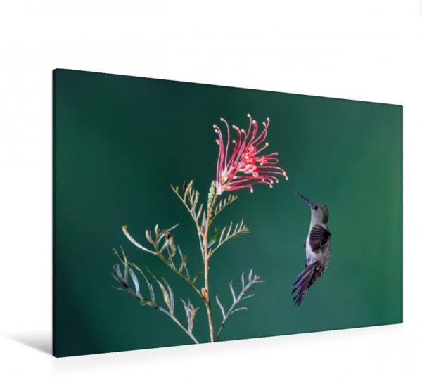 Wandbild Erzkolibri im Anflug