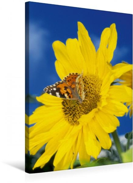 Wandbild Distelfalter auf Sonnenblume