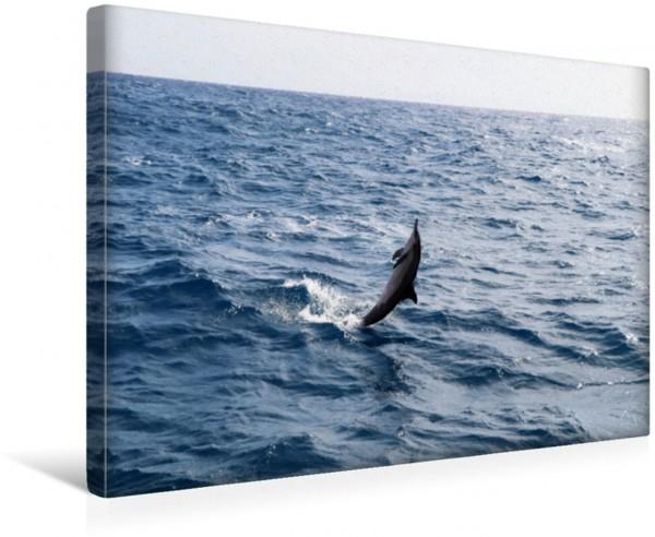 Wandbild Spinnerdelfin