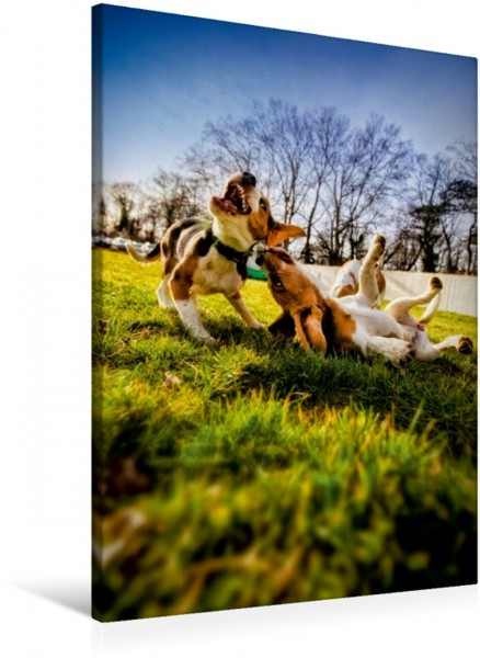 Wandbild Beagle Action - Wilde Kuscheltiere