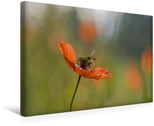 Wandbild Mohnblumen – Pure Faszination in Rot
