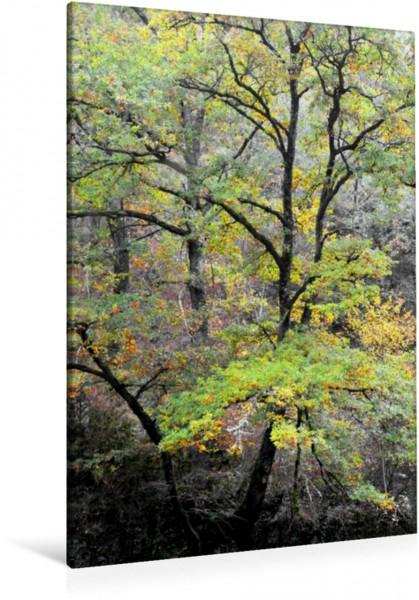 Wandbild Ein Wald in Aveyron