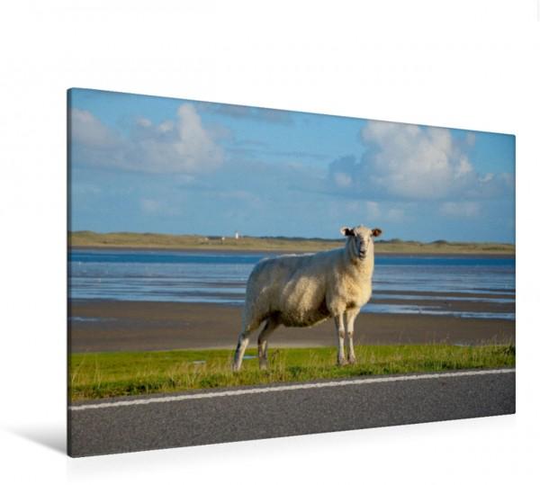 Wandbild Schaf am Straßenrand