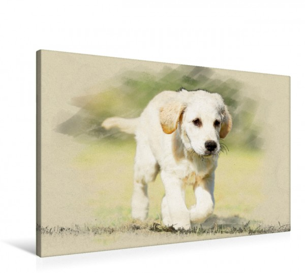 Wandbild Golden Retriever 2017