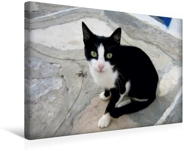 Wandbild Katzen der Kykladen - Spielkamerad auf Mykonos Katzen der Kykladen Katzen der Kykladen
