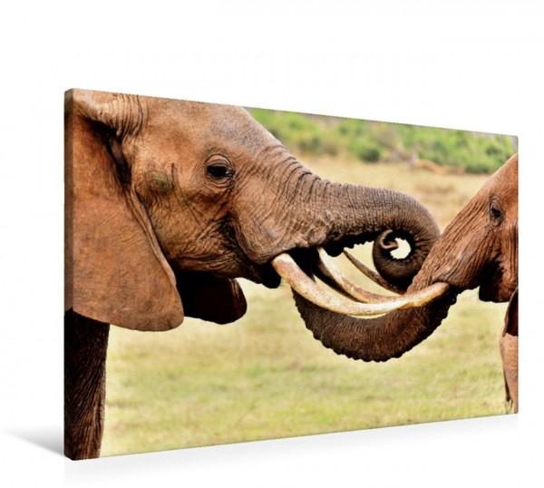Wandbild Begrüßung zweier Elefanten Elefanten Afrikas Elefanten Afrikas