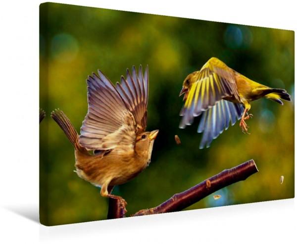 Wandbild Singvögel in Deutschland