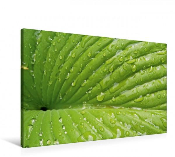 Wandbild Kraftquelle Grün