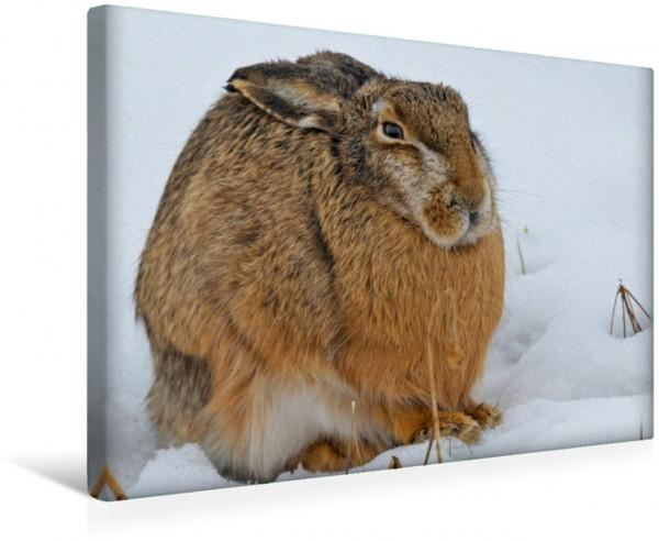 Wandbild Hase im Schnee