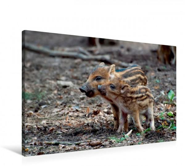 Wandbild Wildschwein