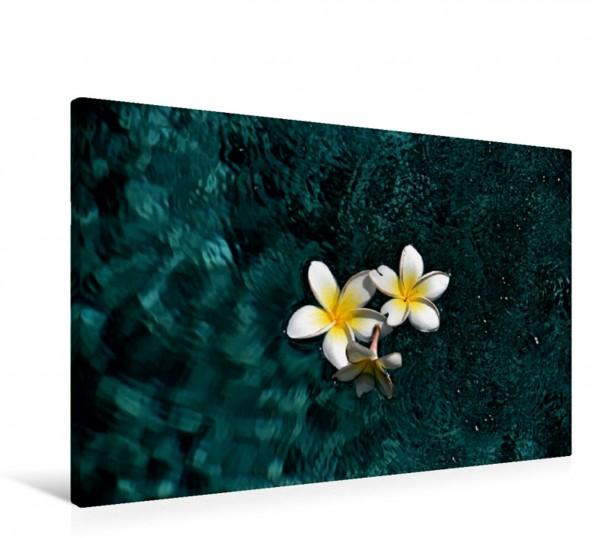 Wandbild Frangipaniblüten im Wasser, Bali