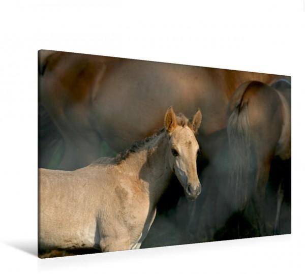 Wandbild Wildpferd-Fohlen