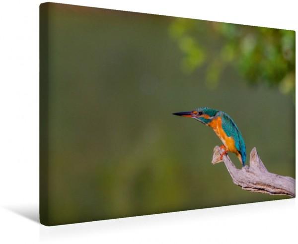 Wandbild Eisvögel Alcedo atthis - Edelsteine der Natur