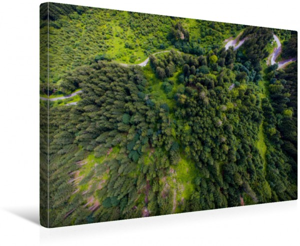 Wandbild Sommerwald von oben