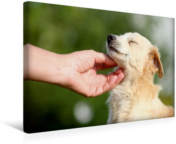 Wandbild Ausgesetzte und kranke Hunde an der wunderschönen Costa de la Luz ...
