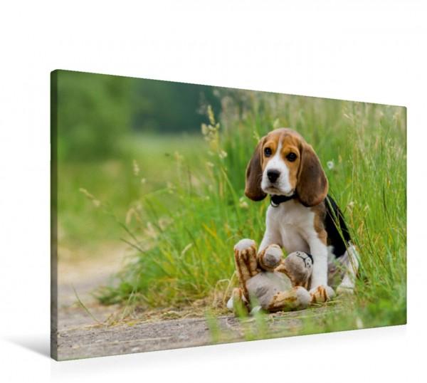 Wandbild Beagle-Welpe mit Teddy