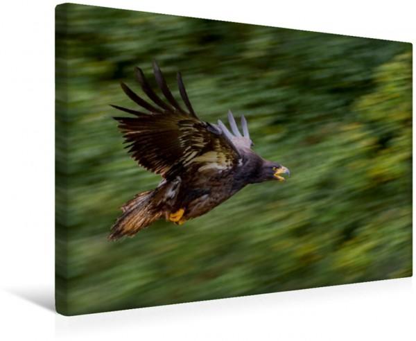 Wandbild Adler