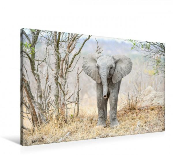 Wandbild Auge in Auge mit dem Babyelefant