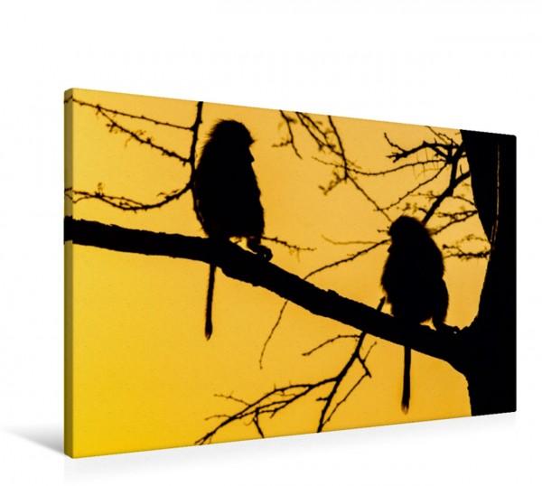 Wandbild Paviane im Morgenlicht