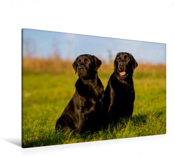 Wandbild Labrador Retriever - ein Herz auf 4 Pfoten